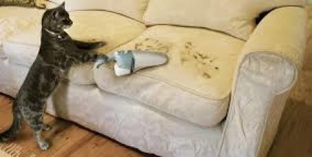 Как почистить мягкую мебель пылесосом
